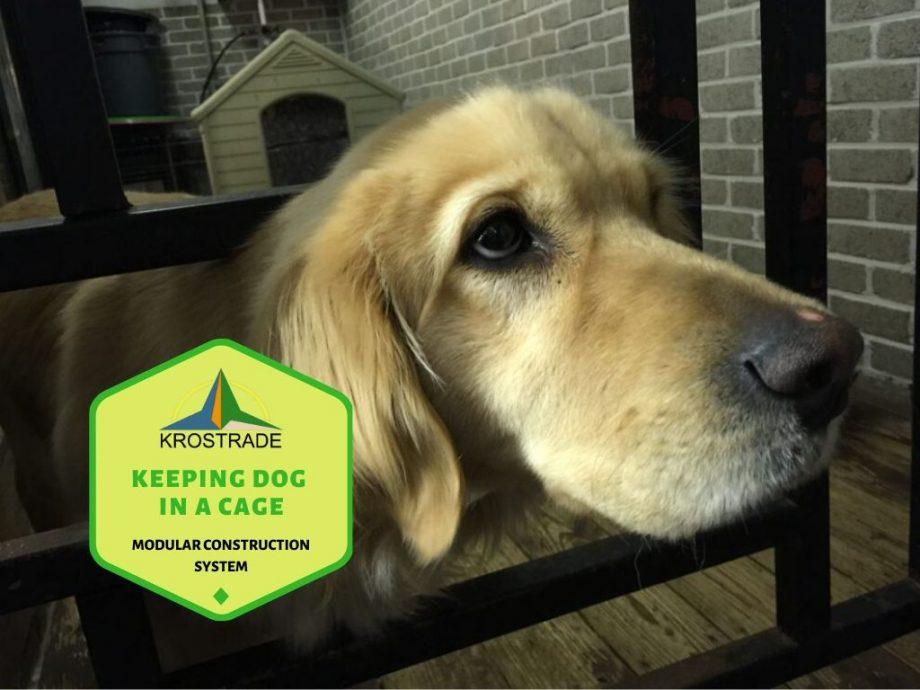 Vad du behöver veta om att hålla en hund i bur hela dagen